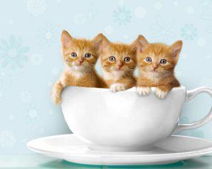 _-cats-cats-22066039-1280-1024